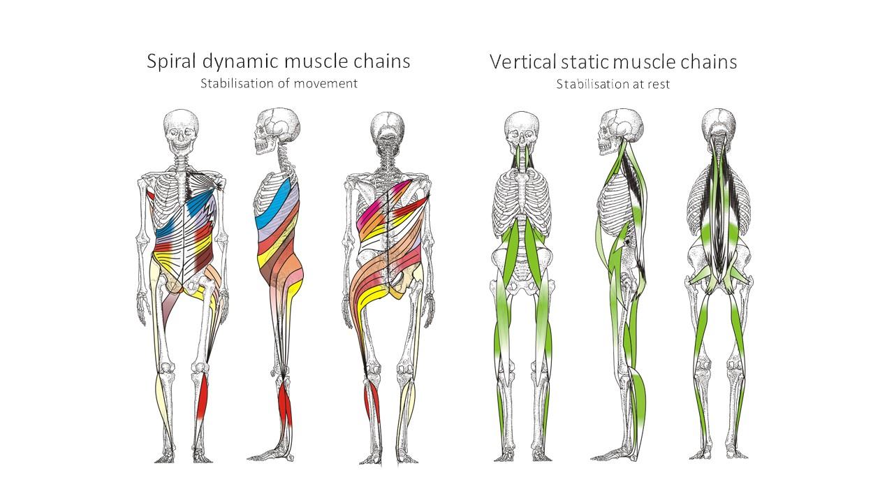 Spiral Stabilization UK | Muscle Chains - Spiral Stabilization UK